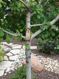 preparing our tree for winter ask an expert