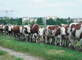 chambre agriculture drome un système de pâturage de prairies multiespèces innovant