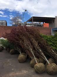 denver landscape installation gallery denver landscaping services