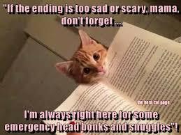 Scared Cat Meme - deluxe 23 scared cat meme wallpaper site wallpaper site