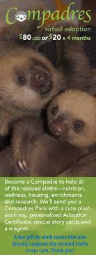 4 toed sloth sloth digestion