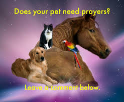 pet prayer pets needing prayers dusty rainbolt s universe