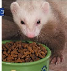 the hammock ferret diet