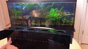 indoor aquaponics system how to grow vegetables in your aquarium