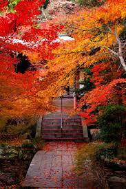 261 autumn images nature autumn fall