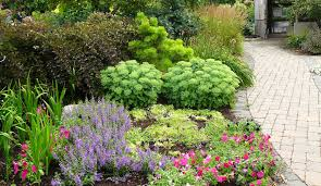 plant selection sulis sustainable urban landscape information