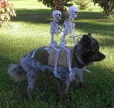 Halloween Dog Costume Halloween Dog Costumes