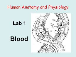 Anatomy And Physiology Cells And Tissues Human Anatomy And Physiology Lab 1 Blood Background I Blood Is