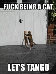 Lets Fuck Memes - fuck being a cat let s tango memes and comics