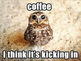 White Owl Meme - a brown and white owl description generated with coffee in my veins