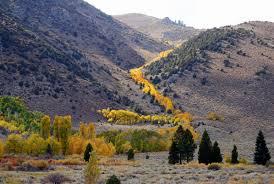 trees u0026 groves film mono county