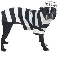 pug halloween costume for baby casual canine prison pooch halloween costume