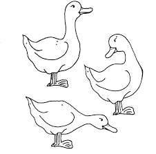 coloring page ducks coloring me