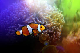 finding nemo royalty free stock photo image 8354005