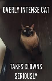 Funny Clown Meme - overly intense cat takes clowns seriously overly intense cat