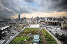 agriculture sowing the city nature nature research