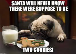 Christmas Dog Meme - 50 hilarious dog memes that will make you laugh my puppy care