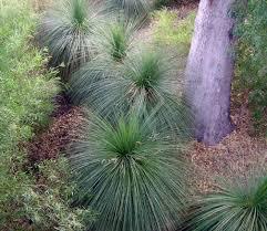 ornamental grass garden grasses gardens and plants