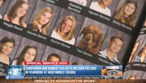 middle school yearbook pictures labrador golden service dog gets into school yearbook