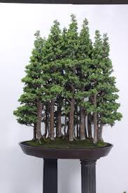 394 best bonsai images on bonsai trees bonsai and