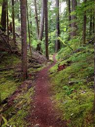 best trail running trails in mt hood national forest 2145