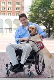 253 best service u0026 therapy animals images on pinterest service