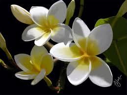 Beautiful Flowers 28 Beautiful Flowers Top 11 Most Beautiful Flowers In The
