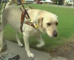 Blind Dog And His Guide Dog 105 Best Guide Dogs And Horses Images On Pinterest Guide Dog
