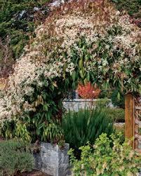Fragrant Plants For Shade - fragrant plants for pathways fine gardening