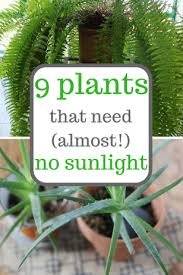 house plants no light 9 plants that need almost no sunlight indoor gardening