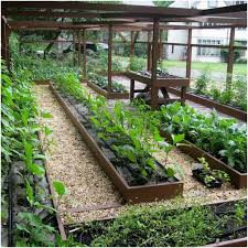 Backyard Vegetable Gardening by Backyards Fascinating Backyard Vegetable Garden Design Best