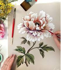 Peony Flowers best 25 peony drawing ideas on pinterest peony peony