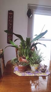winter garden plants cactus succulents indoor sweetsucculents and