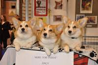 dog world crufts 2009 discover dogs welcomes the queen u0027s corgis