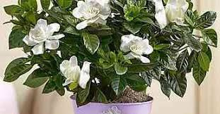 Flower Promotion Codes - 1800 flowers promo codes coupons archives 1800 flowers coupon code