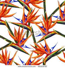 seamless bird paradise flower pattern stock illustration