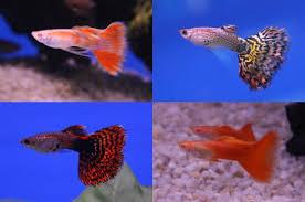 aquarium fish how to set up a spawning tank pethelpful