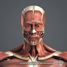 Google Human Anatomy 35 Best Human Body Awesome Images On Pinterest Human Body