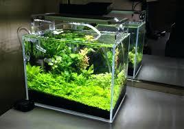 membuat aquascape bening aquascape nano homedesignpicture win