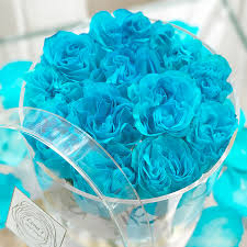 teal roses exclusive clear box 12 aqua blue roses lenas floral