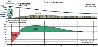 brise vent transparent fonctions agronomiques u2013 prom u0027haies poitou charentes