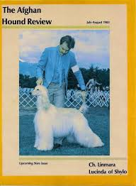 afghan hound national dog show about us shylo county club for dogs