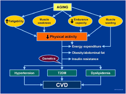 diabetes and cardiovascular disease in older adults current