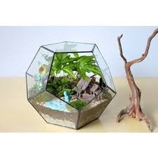 aliexpress com buy table dodecahedron glass terrarium soldered