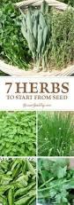 best 25 herb seeds ideas on pinterest growing herbs thyme