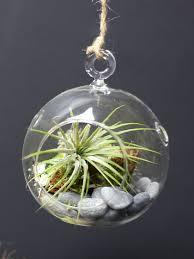 air plant terrarium kit hanging terrarium hanging glass terrarium