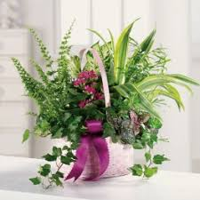 flower delivery cincinnati sympathy and funeral flower delivery in cincinnati s florist