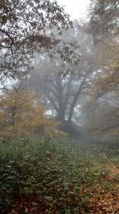 forest glade mystique 4