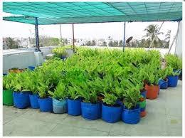 terrace gardening grow bag for terrace gardening at rs 51 piece new perungalathur