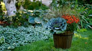 Beauty Garden by Laura From Garden Answer Shows You How To Plant A Fall Container
